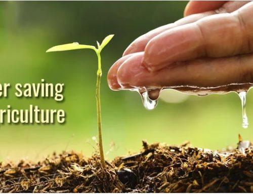 Economisirea apei în agricultură: Iată cum să limitezi pierderile de apă!
